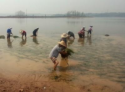 水生态施工现场
