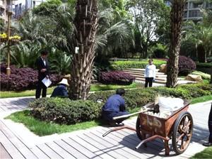 汇融名城园林绿化养护工程
